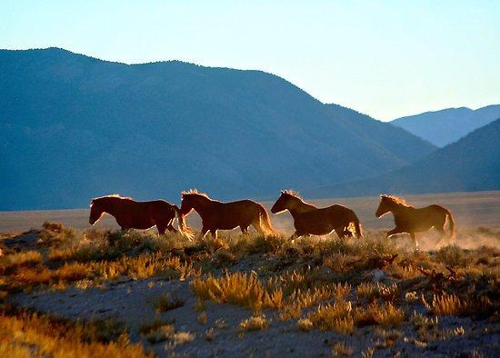 GREAT BASIN WILD HORSES.jpg
