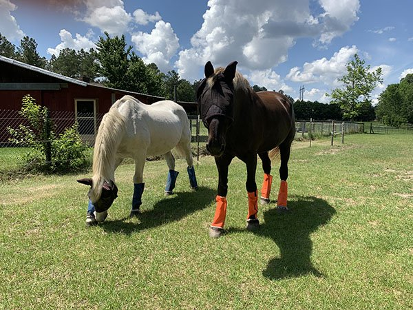 Two horses protected from flies