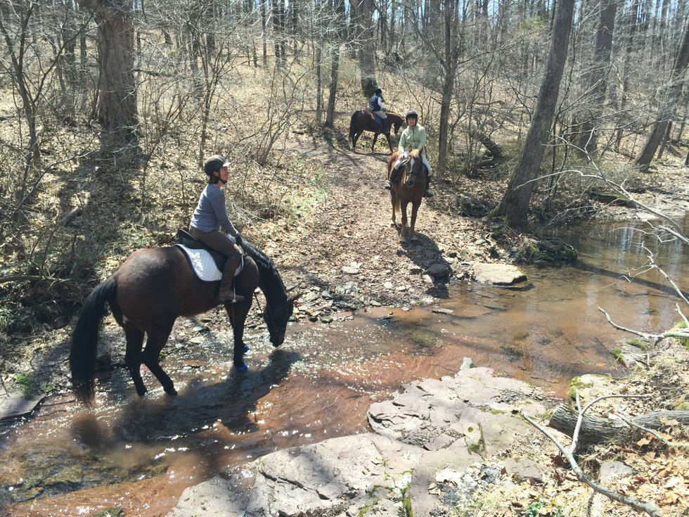 Horse and rider in a stream