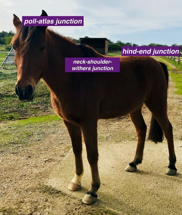Pole-hind end.jpg