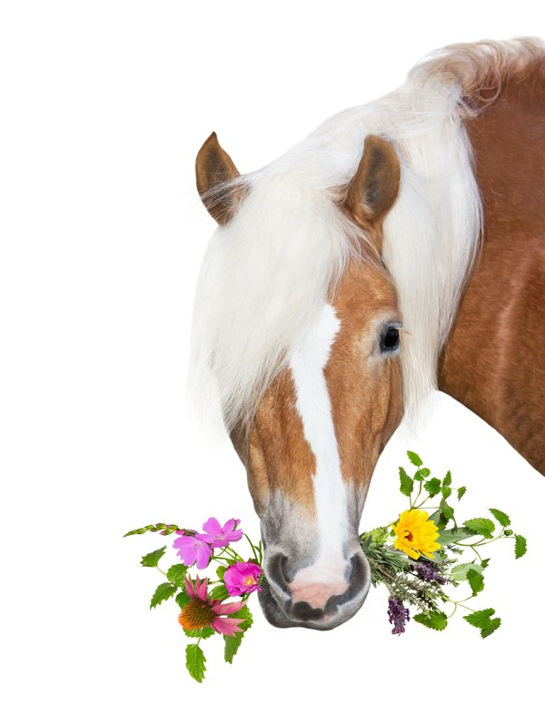 Horse herbs in mouth