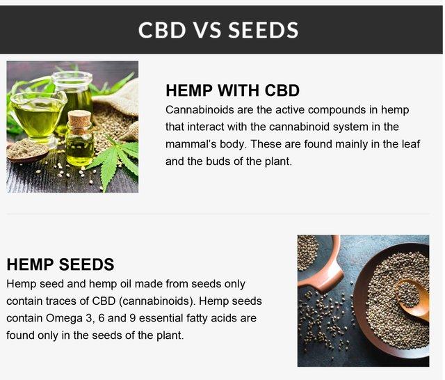 CBD vs Seeds