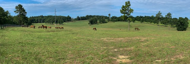 Pasture horses