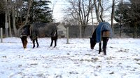 Two Blanketed Horses