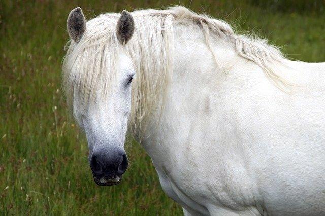 Heavy Horse - IR