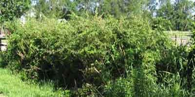 hedgerow.jpg
