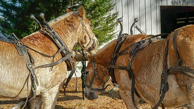 Hot Driving Horses