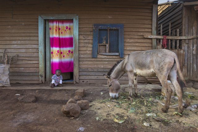 Donkeys are important to families income