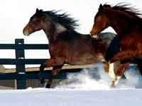horseincold.jpg