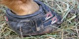 horse-foot-in-boot.jpg