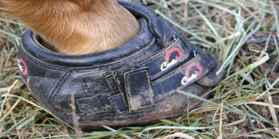 Hoof Boots & Your Horse