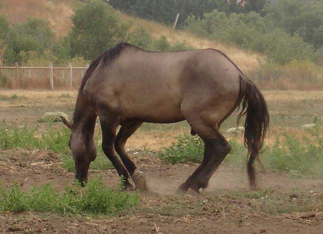 HorseRolling-Colic-KimBaker