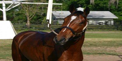 horse-on-walker.jpg