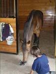 horseplayinglegos.jpg
