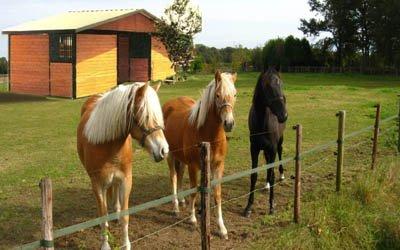 horsesbarn.jpg