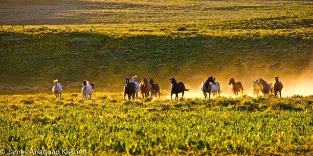 HorseMedicine4.jpg
