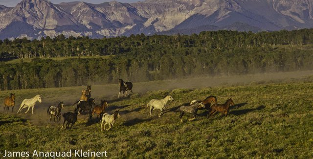 Wild-Horses-JamesKleinert.jpg