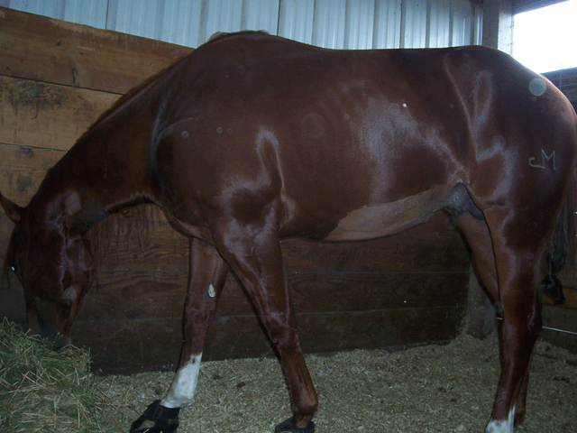 Belly wound