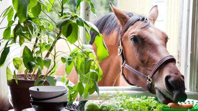 Horse Help