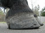 Hoof 9 months later