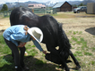 Bowing Horse