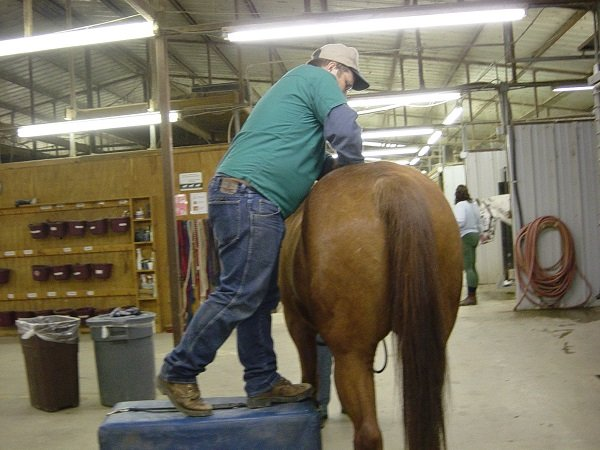Horse getting chiropractic on its back