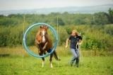 Horse Agility.JPG