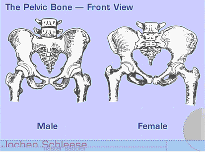 Male Vs Female Pelvis