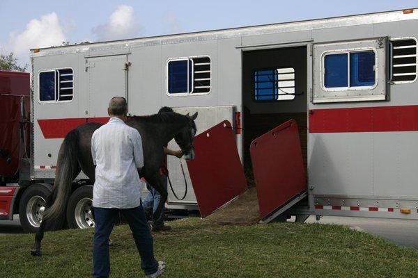 Shipping a Horse