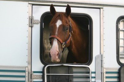Horse in a Trailer