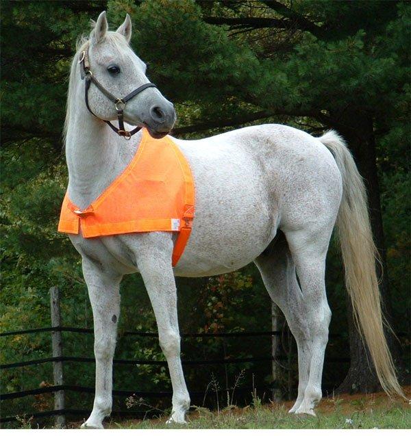 Protecta Vest Horse