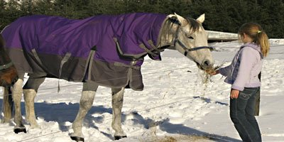Blanketed horse