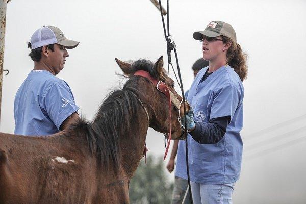 vet care for Guatemalan Pack Horses