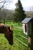 horsesolarfence.jpg