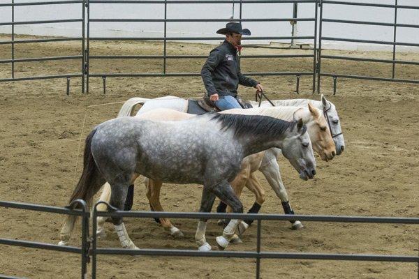 Cox-with-horses.jpg