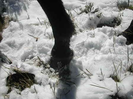 Hoof in snow.jpg