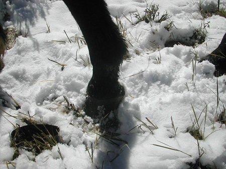 Hoof in snow.jpg