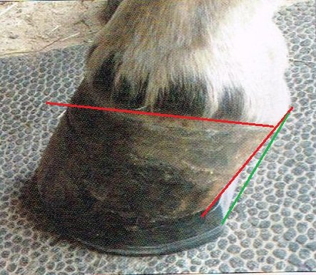 Hoof after a wedge pad