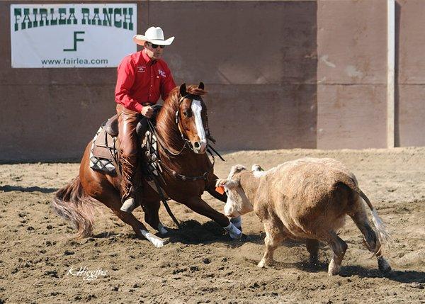 2015 Illinois Horse Fair