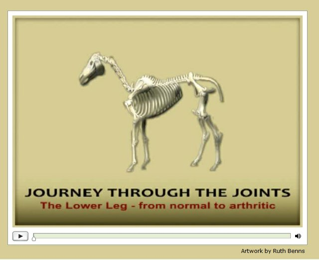 joint3+sidebar graphic journey through the joints.jpg