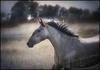 Mustang Excalibur