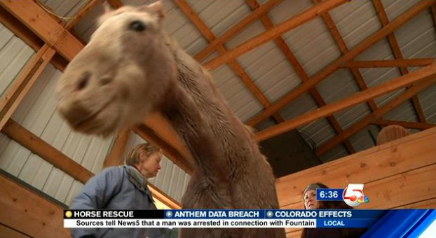 Colorado Horse Rescue