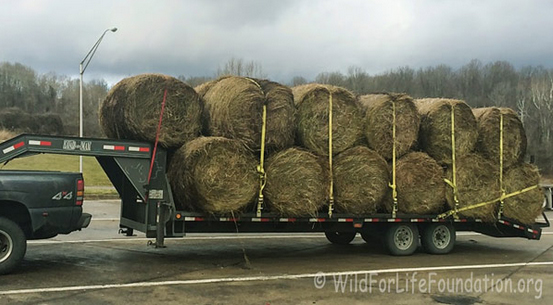 Curing And Storing Hay Holistichorse Com