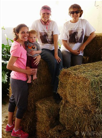 Hay drive helps USA's hungry, homeless horses