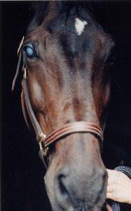 catarct-in-horse.jpg