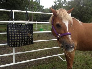 NibbleNet-BagFence-HorseFac.jpg