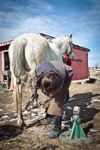 Horse Trim