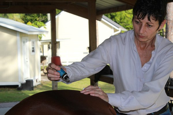 Raindrop therapy on a horse